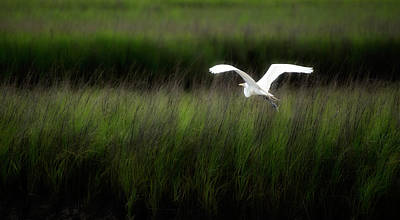 Poster featuring the photograph Egret At Pawleys Island by Frank Bright
