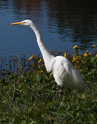 Egret In Flowers 11x14 Vertical Poster