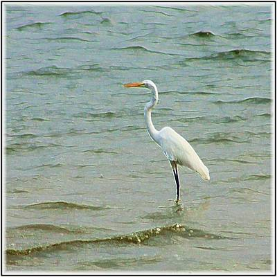 Egret In The Shallows Poster