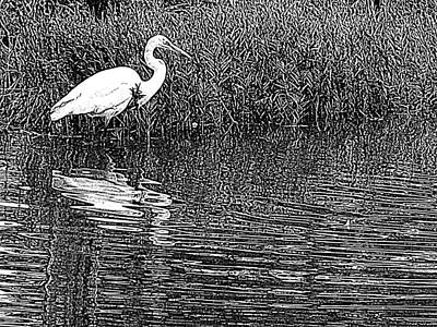 Egret In The Thicket Poster