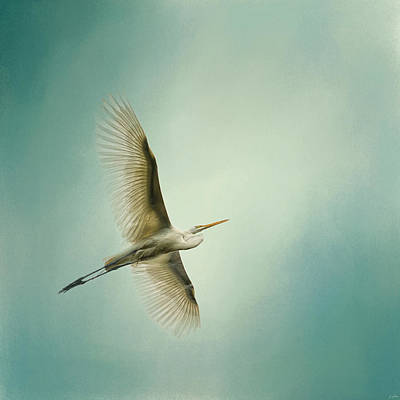 Egret Overhead Poster by Jai Johnson