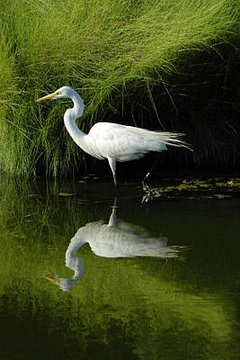 Egret Reflections Poster by Lara Ellis