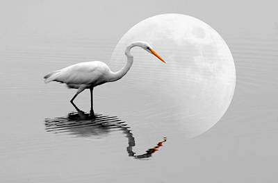 Egret With Moon  Poster