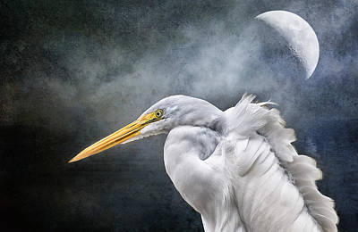 Poster featuring the photograph Egret's Moon by Brian Tarr