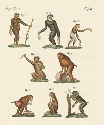 Eight Kinds Of Monkeys Poster by Splendid Art Prints