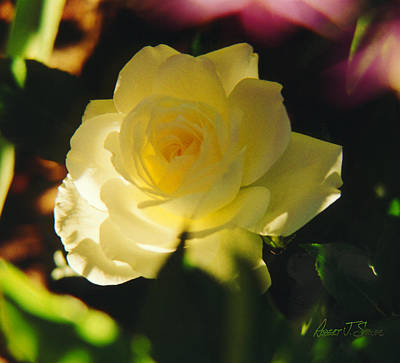 El Salto Rose - Lemonwhippedcream One Poster