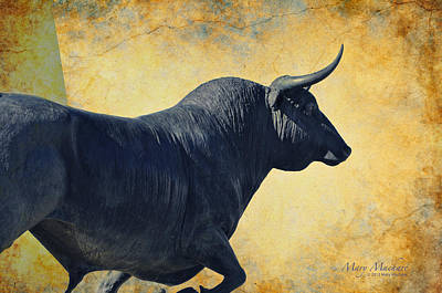 El Toro  Poster by Mary Machare