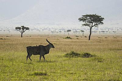 Poster featuring the photograph Eland In Masai Mara by Antonio Jorge Nunes
