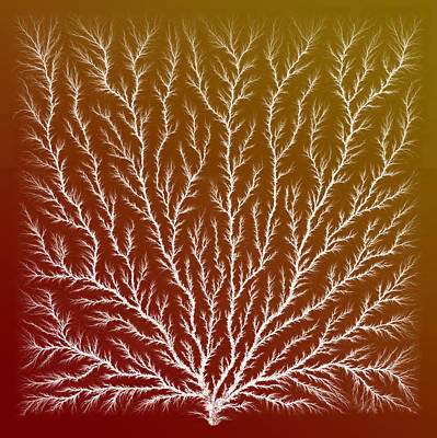 Electron Tree Or Lichtenberg Figure Poster