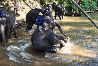 Elephant Baths - Maesa Elephant Camp - Chiang Mai Thailand - 011315 Poster