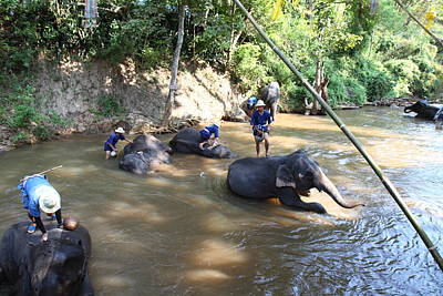 Elephant Baths - Maesa Elephant Camp - Chiang Mai Thailand - 011317 Poster by DC Photographer