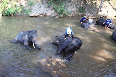 Elephant Baths - Maesa Elephant Camp - Chiang Mai Thailand - 011318 Poster by DC Photographer