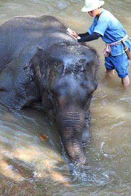 Elephant Baths - Maesa Elephant Camp - Chiang Mai Thailand - 011322 Poster