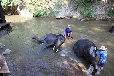 Elephant Baths - Maesa Elephant Camp - Chiang Mai Thailand - 011323 Poster