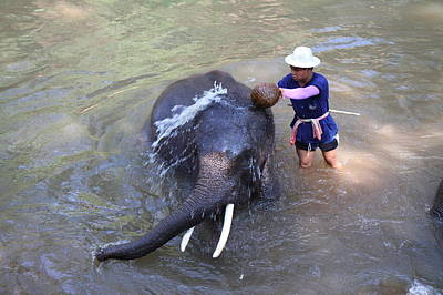 Elephant Baths - Maesa Elephant Camp - Chiang Mai Thailand - 011324 Poster