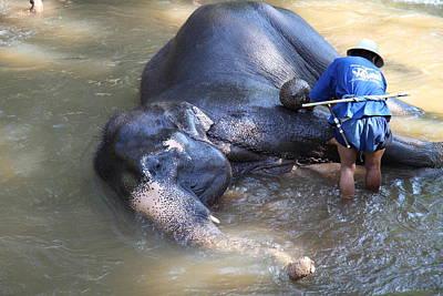 Elephant Baths - Maesa Elephant Camp - Chiang Mai Thailand - 011325 Poster
