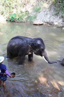 Elephant Baths - Maesa Elephant Camp - Chiang Mai Thailand - 011328 Poster by DC Photographer