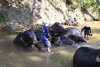 Elephant Baths - Maesa Elephant Camp - Chiang Mai Thailand - 011329 Poster