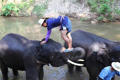 Elephant Baths - Maesa Elephant Camp - Chiang Mai Thailand - 011330 Poster by DC Photographer