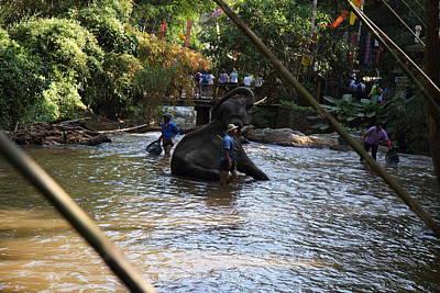 Elephant Baths - Maesa Elephant Camp - Chiang Mai Thailand - 01139 Poster by DC Photographer