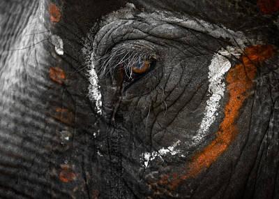 Elephant Eye Poster by Dutourdumonde Photography