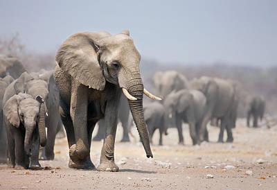 Elephant Feet Poster by Johan Swanepoel
