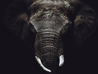 Elephant Portrait  Poster by Kenny  Noddin