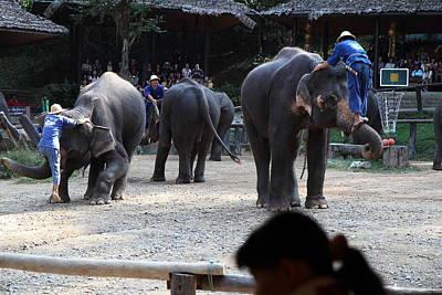 Elephant Show - Maesa Elephant Camp - Chiang Mai Thailand - 011313 Poster by DC Photographer