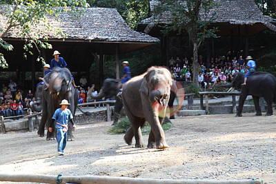 Elephant Show - Maesa Elephant Camp - Chiang Mai Thailand - 011317 Poster by DC Photographer