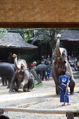 Elephant Show - Maesa Elephant Camp - Chiang Mai Thailand - 011321 Poster