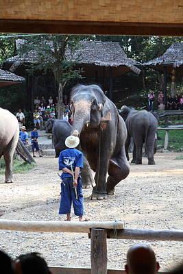 Elephant Show - Maesa Elephant Camp - Chiang Mai Thailand - 011323 Poster by DC Photographer