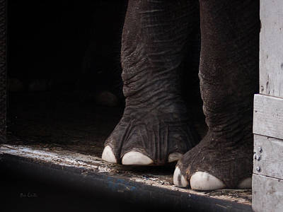Poster featuring the photograph Elephant Toes by Bob Orsillo