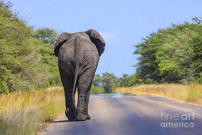 Elephant Walking Poster