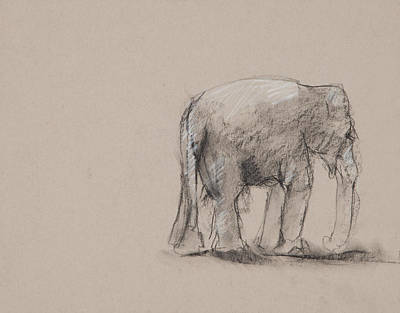 Elephant Charcoal Study #1 Poster