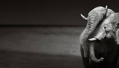 Elephants Interacting Poster by Johan Swanepoel