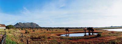 Elephants Near A Pond In Tsavo East Poster by Panoramic Images