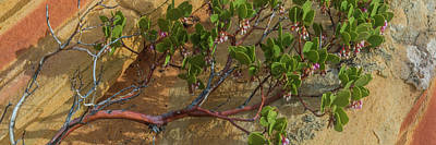 Elevated View Of Fallen Manzanita Tree Poster by Panoramic Images