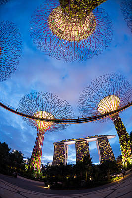 Elevated Walkway At Gardens By The Bay Poster