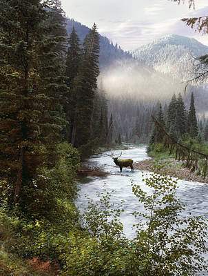 Elk Crossing Poster by Leland D Howard