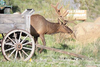 Elk Drawn Carriage Poster