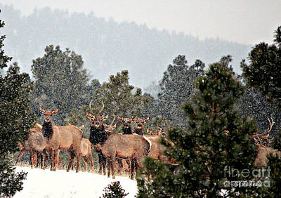 Poster featuring the photograph Elk In The Snowing Open by Barbara Chichester