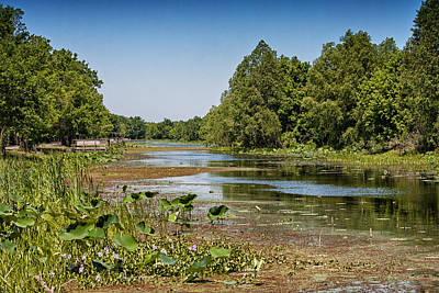 Poster featuring the photograph Elm Lake At Brazos Bend In Texas by Zoe Ferrie