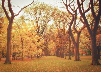 Elm Trees - Autumn - Central Park Poster