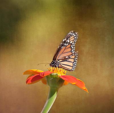 Embracing Nature Poster