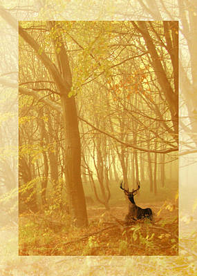 Poster featuring the photograph Enchanted Forest by Chris Armytage