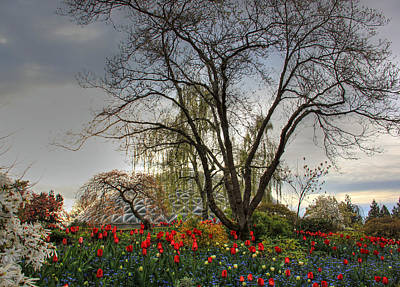 Poster featuring the photograph Enchanted Garden by Eti Reid
