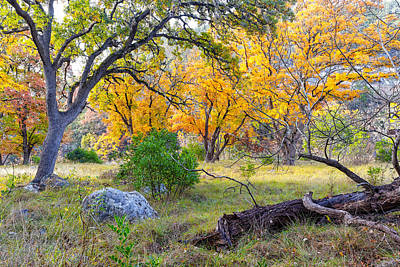 Enchanted Ruggedness Lost Maples State Natural Area - Texas Hill Country  Poster by Silvio Ligutti