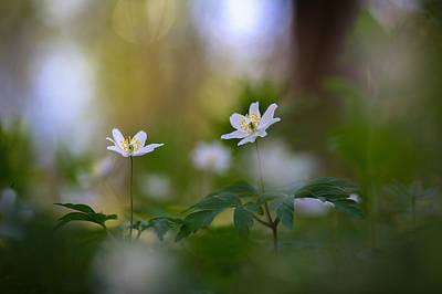 Enchanted Spring Poster