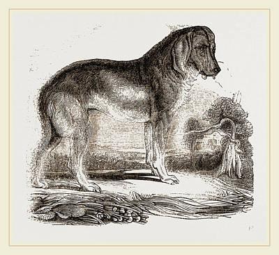 English Blood-hound Poster