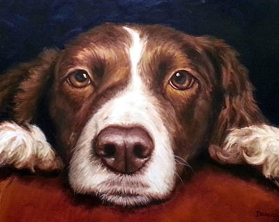English Springer Spaniel Resting On Dark Red Poster by Dottie Dracos